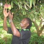 Comité National de Lutte contre les Mouches de Fruits
