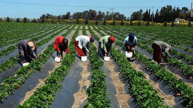 consommer local/Enseignement supérieur agricole/Recrutement de plusieurs stagiaires dans le domaine agricole
