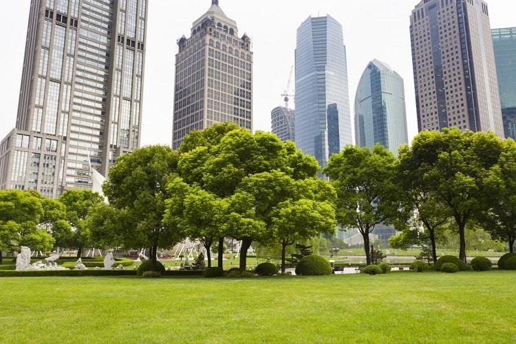 Vivre à proximité d'un espace vert est bénéfique pour le cerveau