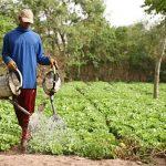 agents de terrain agricoles/Émigration en Europe/Centre d'excellence agricole