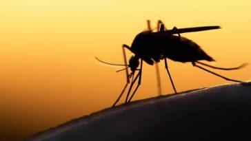 Paludisme en Afrique/MIM 2018 Dakar/lutte contre le paludisme