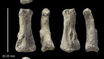 Homo sapiens/Homo Sapiens d'Afrique