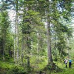gestion sous régionale des forêts