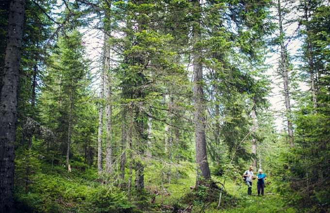 Eaux-Forets-Chasses et des Parcs/gestion sous régionale des forêts