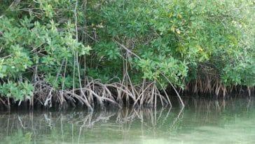 mangrove/Inspection d'académie de Fatick