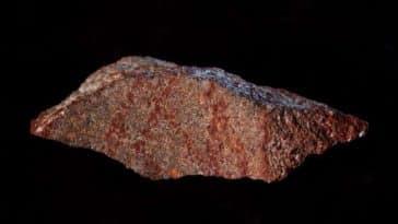 dessin vieux de 73 000 ans