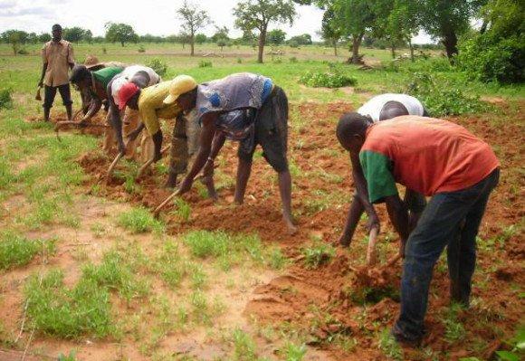 Chargé de Politiques Agricoles/main d'oeuvre agricole jeune