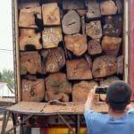 trafic d bois