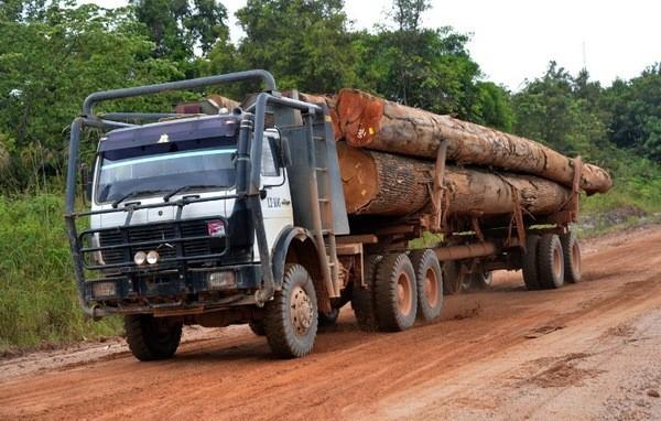 Lutte contre le trafic de bois