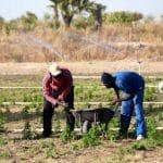 jeunes agriculteurs /entrepreneurs agricoles-Insitut Conficius/Commerciaux (secteur agricole)/Concours CNFT 2019/agriculture numérique