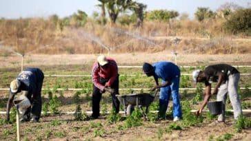 entrepreneurs agricoles-Insitut Conficius/Commerciaux (secteur agricole)/Concours CNFT 2019/agriculture numérique