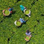 African Green Revolution Forum
