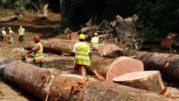 exploitation bois