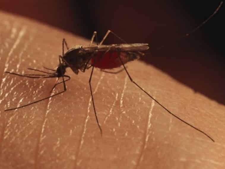 Paludisme moustique asiatique