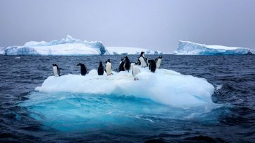 Antarctique-sciences
